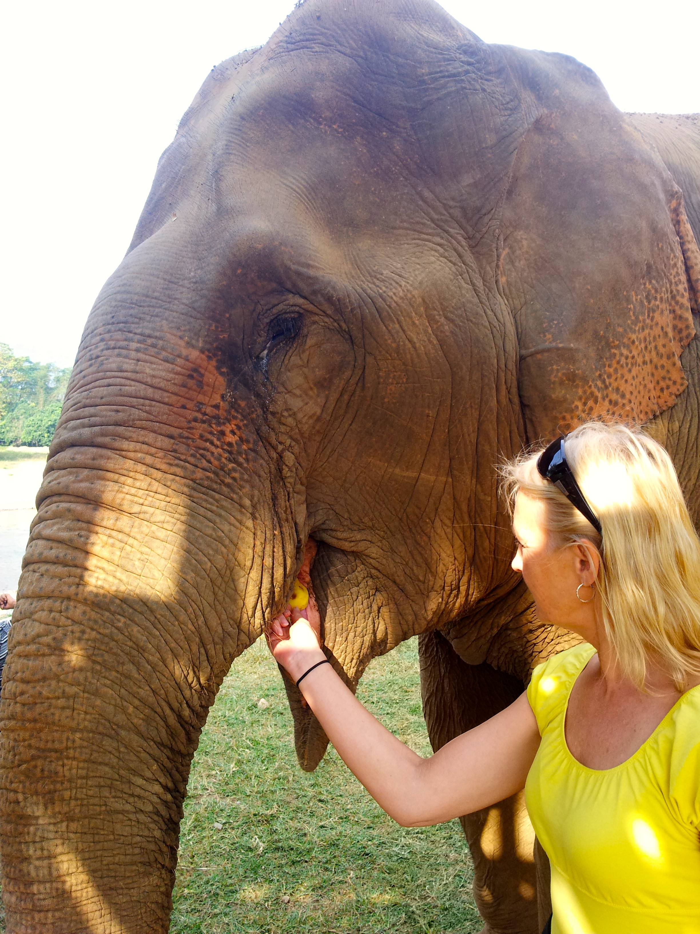 breakpoint-travel-guides-elephant-nature-park-feeding-elephants-teri-church