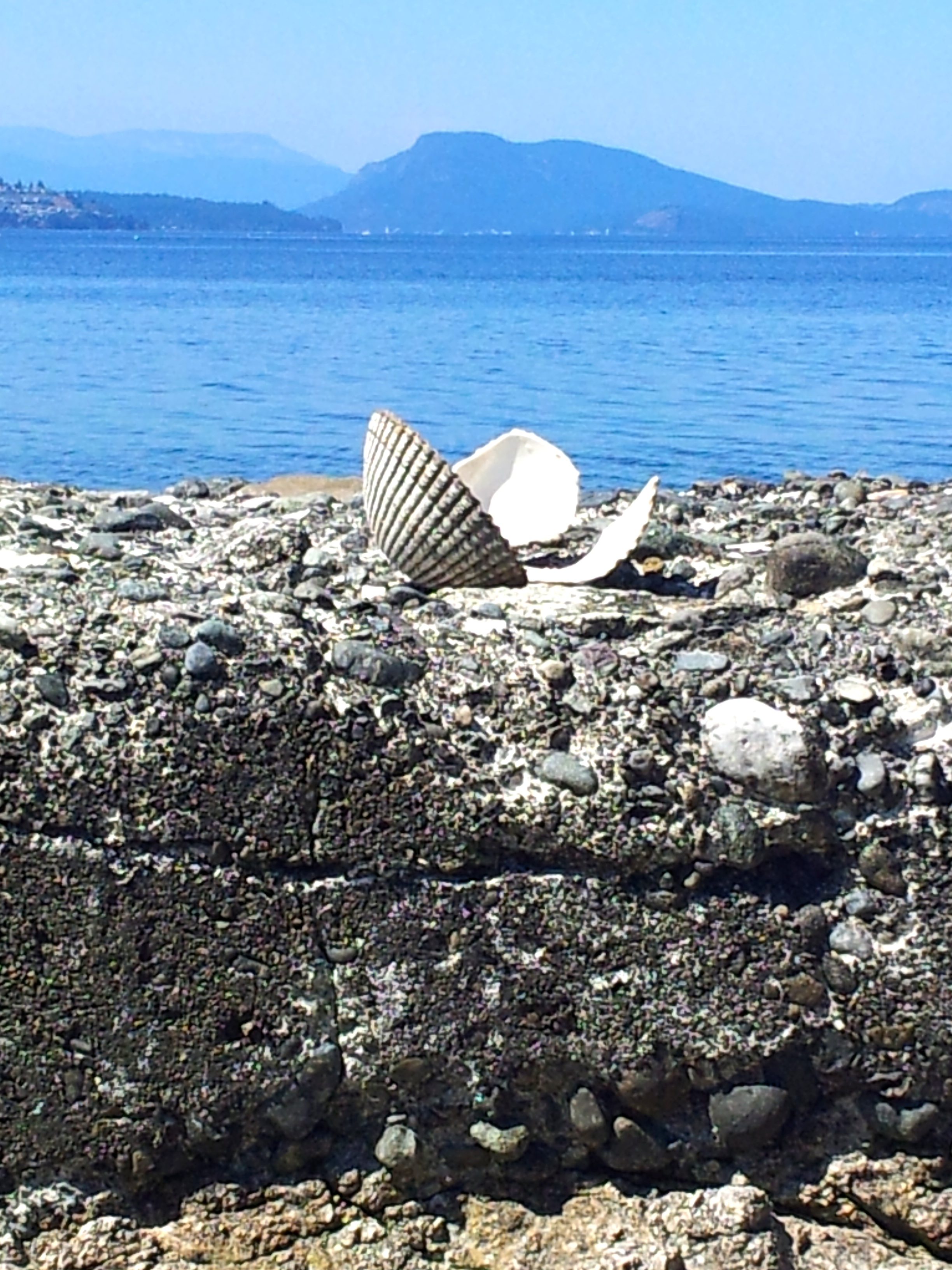 breakpoint-travel-guides-north-saanich-vancouver-island-ardmore-beach-with-shells-teri-church
