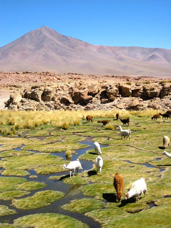 breakpoint-travel-guides-salt-flats-bolivia-animals-courtesy-Myrie-Eaton