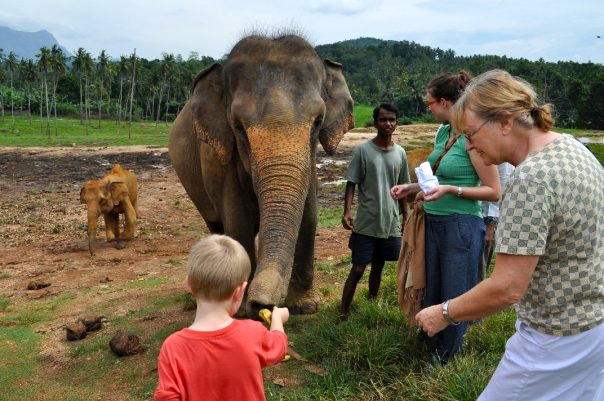 breakpointtravelguides-sri-lanka-pinnewalla-elephant-feeding-kathy-london
