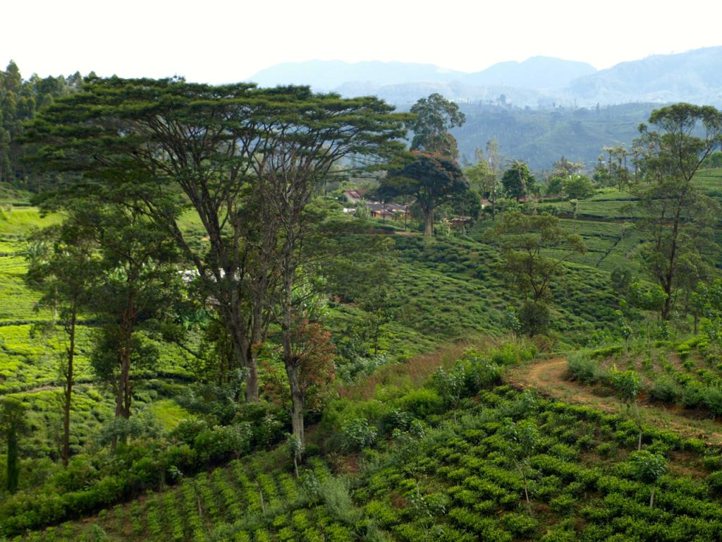 breakpointtravelguides-sri-lanka-Kandy-train-to-nuwara-eliya-tea-country-kathy-london
