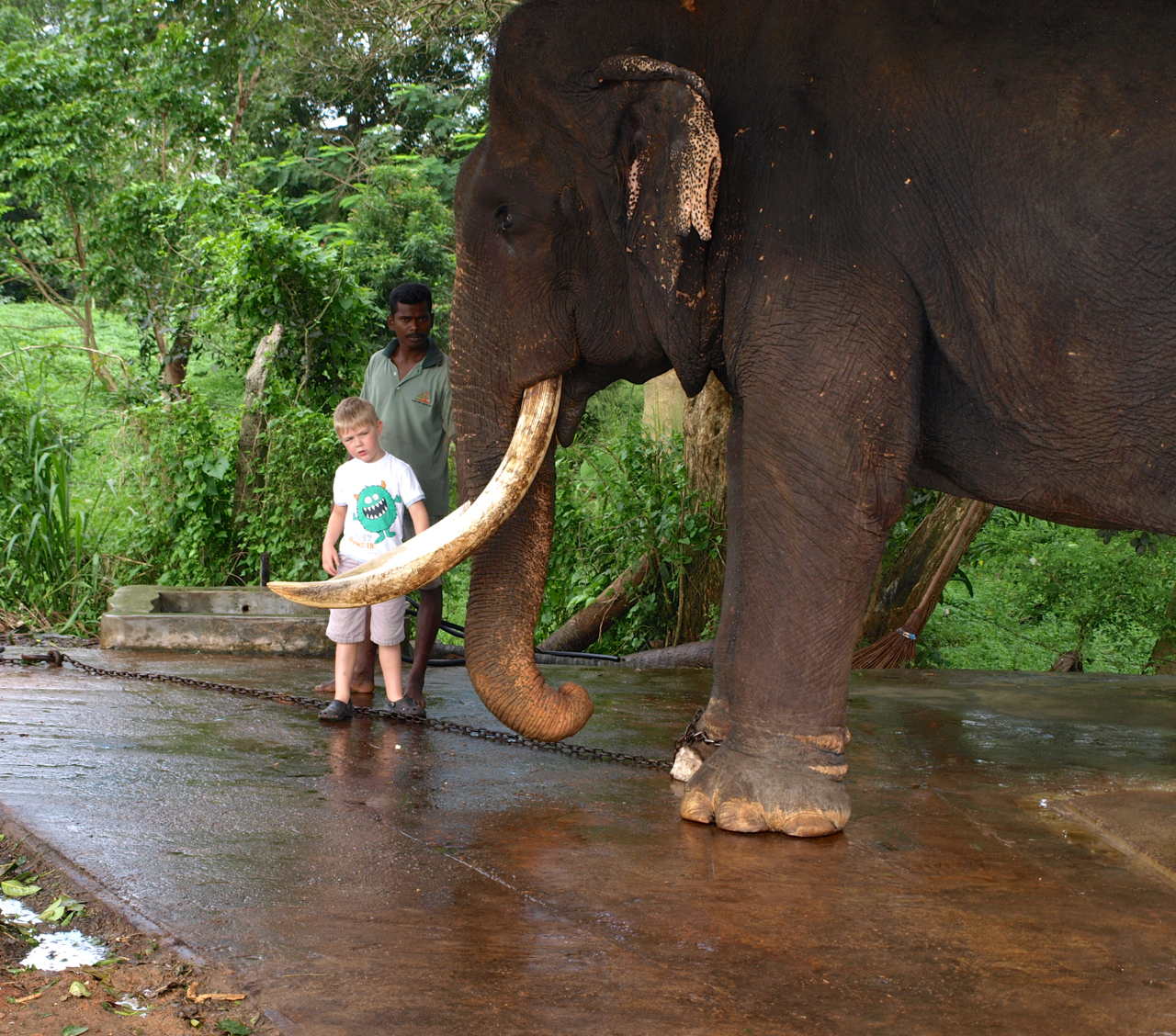 The Gem of Southern Asia:  Exotic and Mysterious Sri Lanka